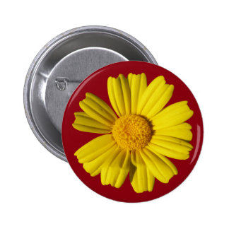 Sunny yellow chamomile button