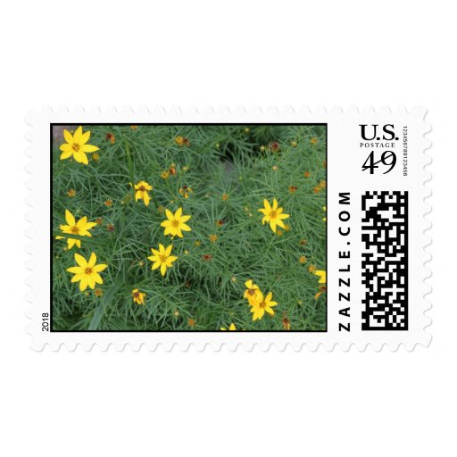 Sunny Yellow Coreopsis Postage Stamp