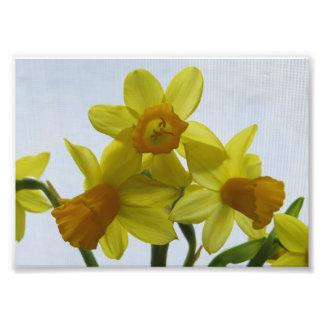 Sunny Yellow Daffodil Flowers Photo Print