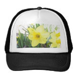 Sunny Yellow Daffodil Mesh Hats