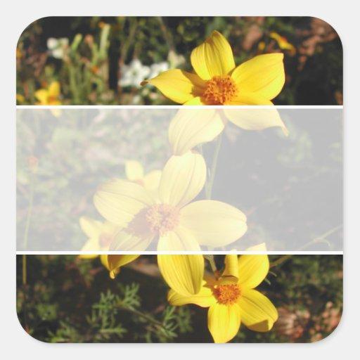 Sunny Yellow Flowers. Bidens. Stickers