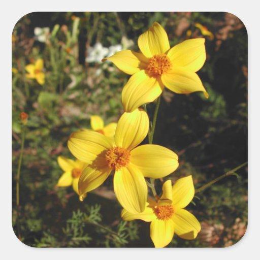 Sunny Yellow Flowers. Bidens. Square Stickers
