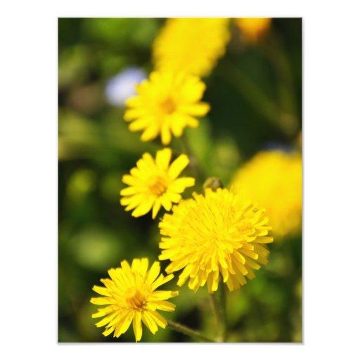 Sunny Yellow Flowers Photo