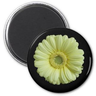 Sunny Yellow Gebera Flower Refrigerator Magnets