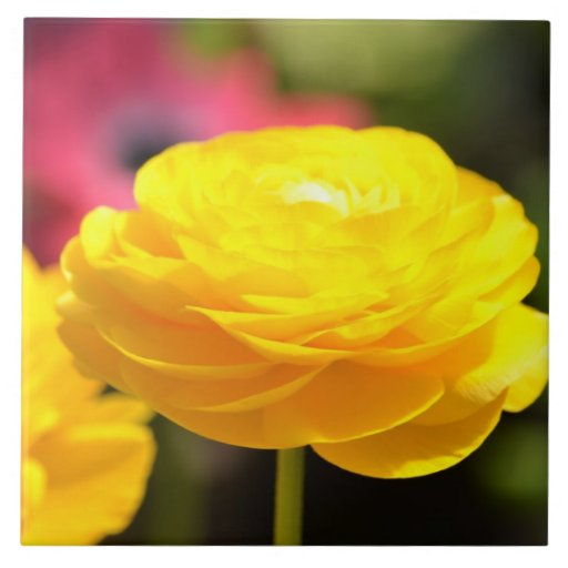 Sunny Yellow Spring Flowers Tile