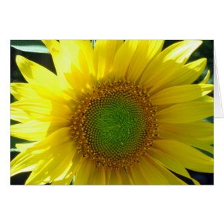 Sunny Yellow Sunflower All-Occasion Card