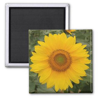 Sunny Yellow Sunflower Refrigerator Magnet