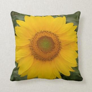 Sunny Yellow Sunflower