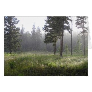 Sunrain Forest Card
