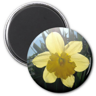 Sunray round magnet