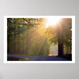 sunrays de la mañana póster
