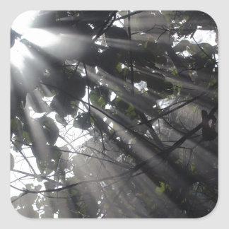 Sunrays in a forest square sticker