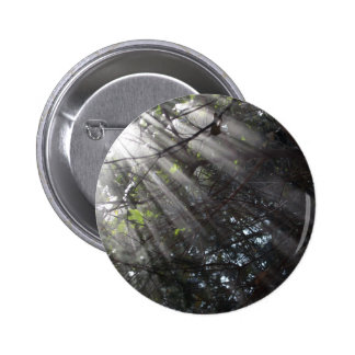 Sunrays in a misty forest pinback button