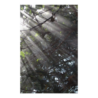 Sunrays in a misty forest stationery