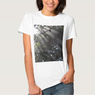 Sunrays in a misty forest t-shirt