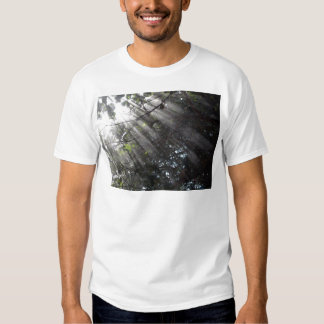 Sunrays in a misty forest tee shirt