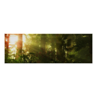 Sunrays in Forest Poster