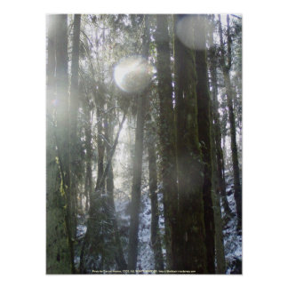 Sunrays  in the Falling Snow Poster