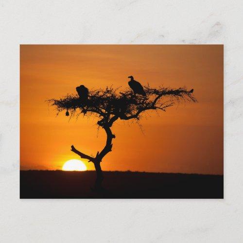 Sunrise at the Masai Mara Kenya Postcard
