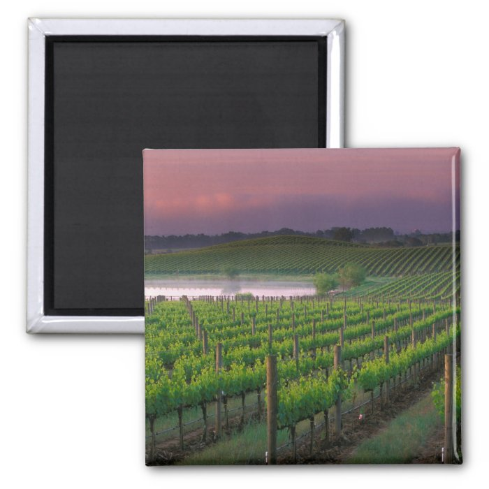 Sunrise color in the distant fog behind 2 inch square magnet