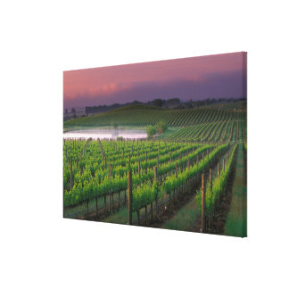 Sunrise color in the distant fog behind canvas print