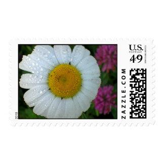 Sunrise Daisy Stamps