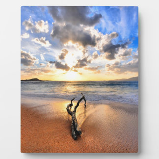 Sunrise Driftwood Beach Photo Plaque