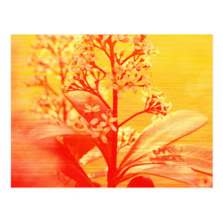 sunrise Flowers phptgraphed by Tutti Postcard