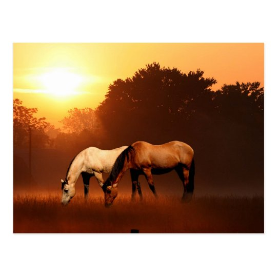 Sunrise horses postcard