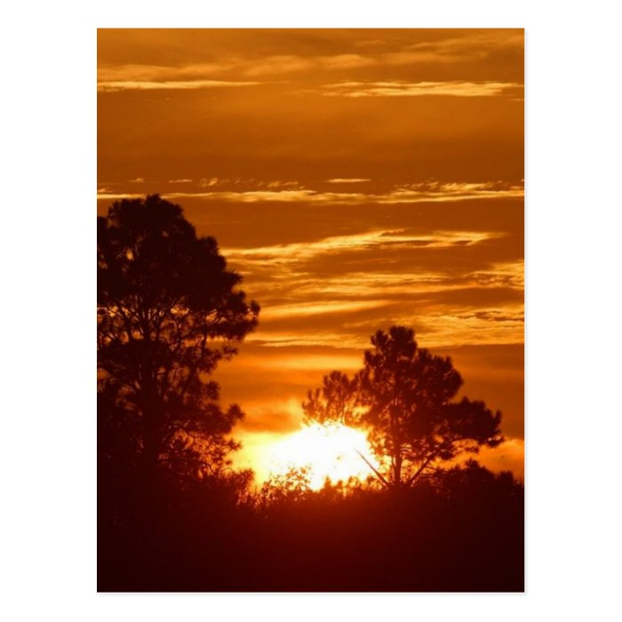 Sunrise In Louisiana Postcard