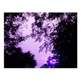 Sunrise in Purple postcard