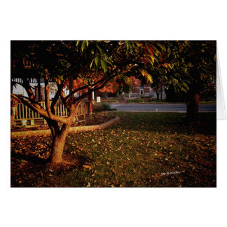 Sunrise in the Park Greeting Cards