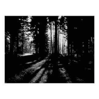 SUNRISE IN THE WOODS POSTER