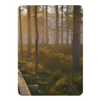 Sunrise in Viru bog at Lahemaa National Park Card