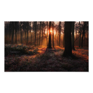 Sunrise in Winter Woods Photo Print
