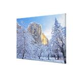 Sunrise light hits El Capitan through snowy Canvas Print