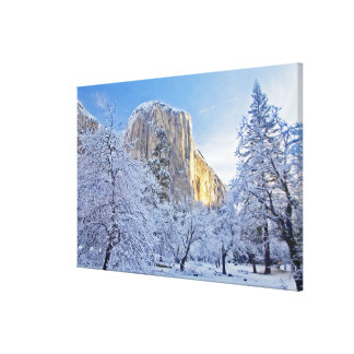 Sunrise light hits El Capitan through snowy Canvas Print