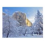 Sunrise light hits El Capitan through snowy Postcard