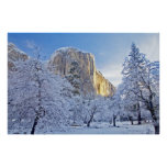 Sunrise light hits El Capitan through snowy Poster