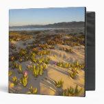 Sunrise lights the sand dunes and sea fig at binder