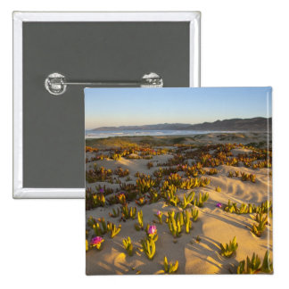 Sunrise lights the sand dunes and sea fig at button