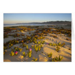 Sunrise lights the sand dunes and sea fig at card