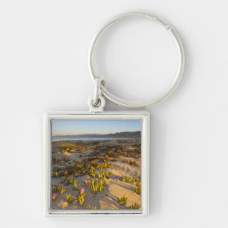 Sunrise lights the sand dunes and sea fig at keychain