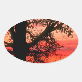 Sunrise Oak Tree Dawn Oldham County Kentucky Oval Sticker