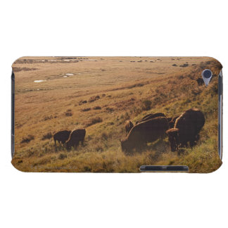 Sunrise On Bison Case-Mate iPod Touch Case