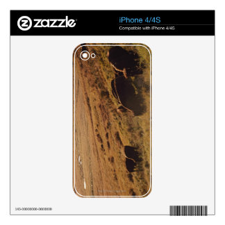 Sunrise On Bison Decal For iPhone 4