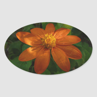 Sunrise on Mexican Sunflower Orange Floral Oval Sticker