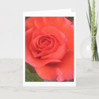 Sunrise Peach Rose Flower Greeting or Note Cards