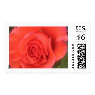 Sunrise Peach Rose Flower Photo Postage Stamps