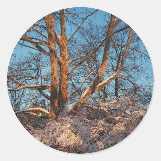 Sunrise, Snow and Sycamore Classic Round Sticker